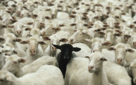 mouton modifier